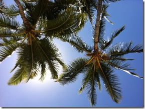 Waikiki Beach 5